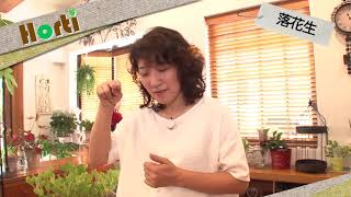 落花生~栽培のポイント