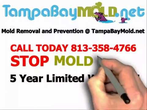 Mold Removal Tampa Mold Remediation 813-358-4766 TampaBayMold.net