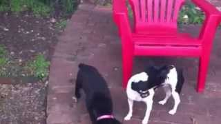 How Do Dogs Correct Puppies | Redeeming Dogs - Dog Training | Tod Mcvicker, Dfw Dog Training