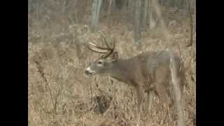 Fair Chase Whitetails 12 Trailer