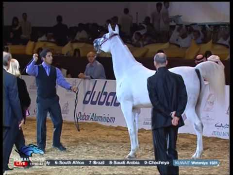 Dubai Racing Channel2012 3 16 13 31 2