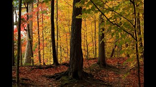 Download lagu 黄晓凤 - SI JANTUNG HATI 马来歌. Autumn Colours 2020 in Ontario, Canada