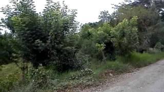 Camino de La uno a Mecapalapa Pantepec Puebla