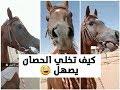 صوت و صهيل الحصان العربي الأصيل