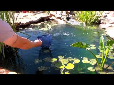 How to build a big fish pond doovi for Big fish pond