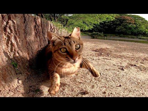 ゴロンゴロン、とにかく甘えん坊な野良猫