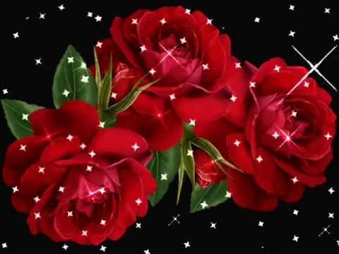 Videos de iguala rosas hermosas youtube - Fotos de flores bonitas ...