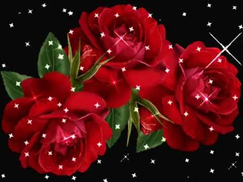 Videos De Iguala Rosas Hermosas Youtube