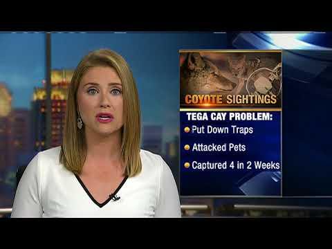 7-8-18 Eyewitness News Sunday 7 a m