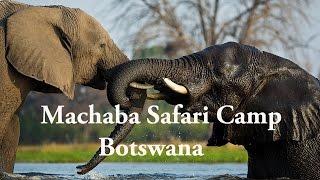 Machaba Luxury Safari Lodge and Camp, Botswana