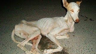 После охоты этих собак обрекают на жуткую смерть просто за их ненадобностью!