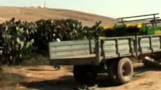 Israel: Kakteen - Wunder der Wüste