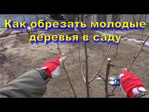 Как обрезать молодые деревья в саду