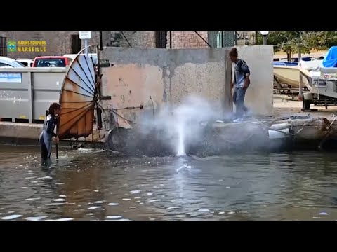 Raw: Whale Flounders in Marseille Harbor