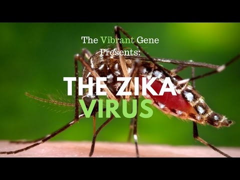 The Zika Virus and Birth Defects (2 of 4)