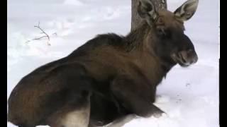 Для детей  Животные зимой