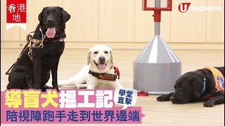 【#香港地】直擊導盲犬學堂  人狗情未了