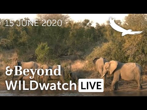 WILDwatch Live | 15 June, 2020 | Afternoon Safari | South Africa