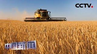 [中国新闻] 中国粮食年工业总产值突破3万亿元 | CCTV中文国际