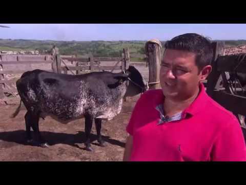 Animal com corpo de bovino e cabeça de equino chama atenção na Bahia