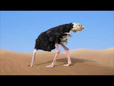 Как страус прячет голову в песок