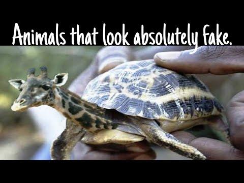 5 such animals which are genuine but seem to be fake. ऐसे जानवर देखने के लिए नसीब लगता है।