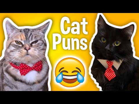 Terrible Cat Puns - You've Got To Be KITTEN Me!