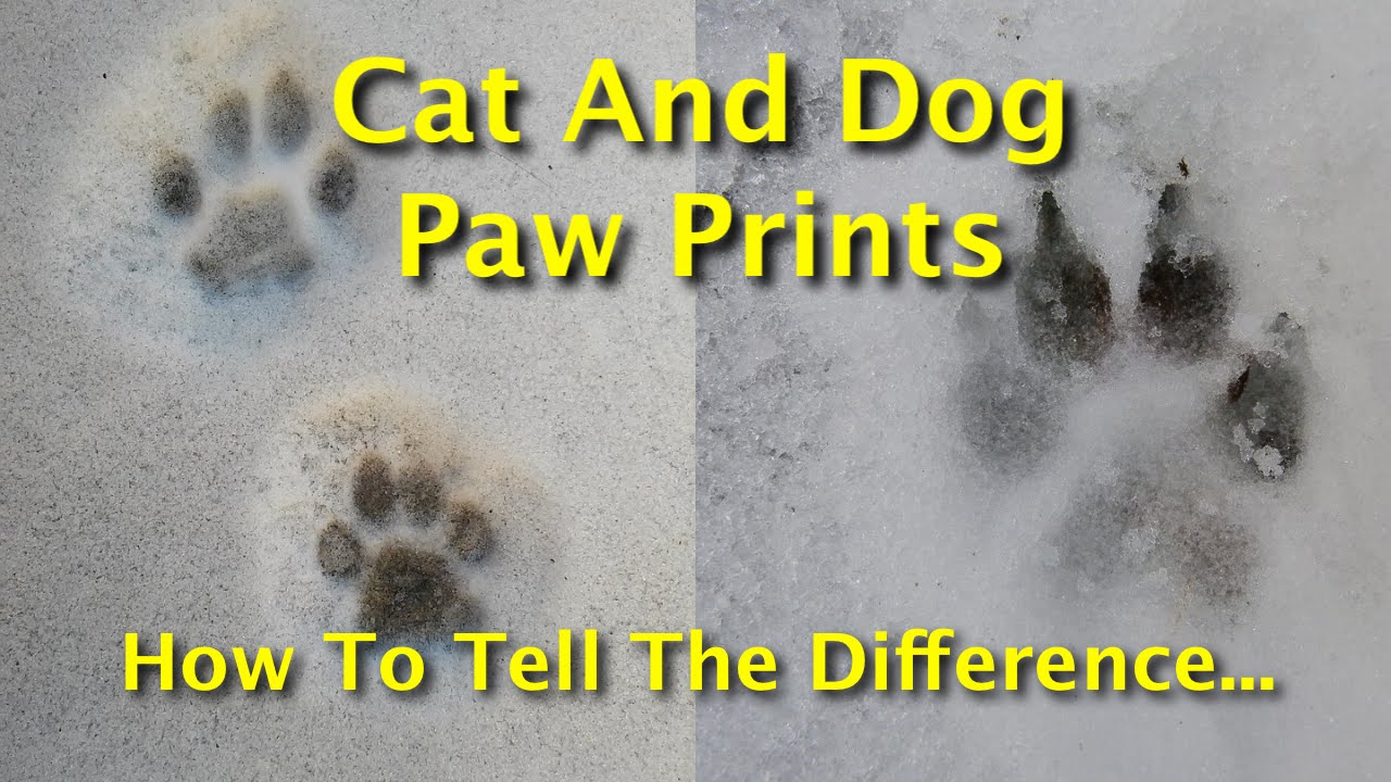 Cat And Dog Paw Prints How To Tell The Difference Between Canine
