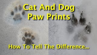 Cat And Dog Paw Prints: How To Tell The Difference Between Canine And Feline Tracks