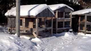 Canadian Rabbit Hutch Winter Update