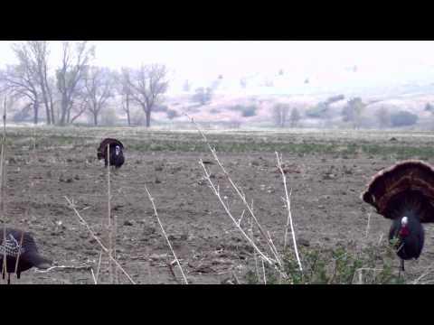 Turkey Hunting Rosebud, South Dakota