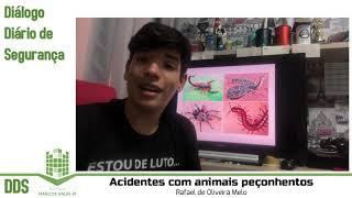 DDS: Animais peçonhentos (cobras, escorpiões, aranhas) em obras - Primeiros socorros