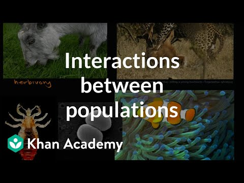 Interactions between populations| Ecology | Khan Academy