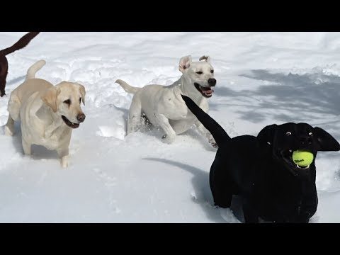 DOGS PLAY IN THE SNOW!!