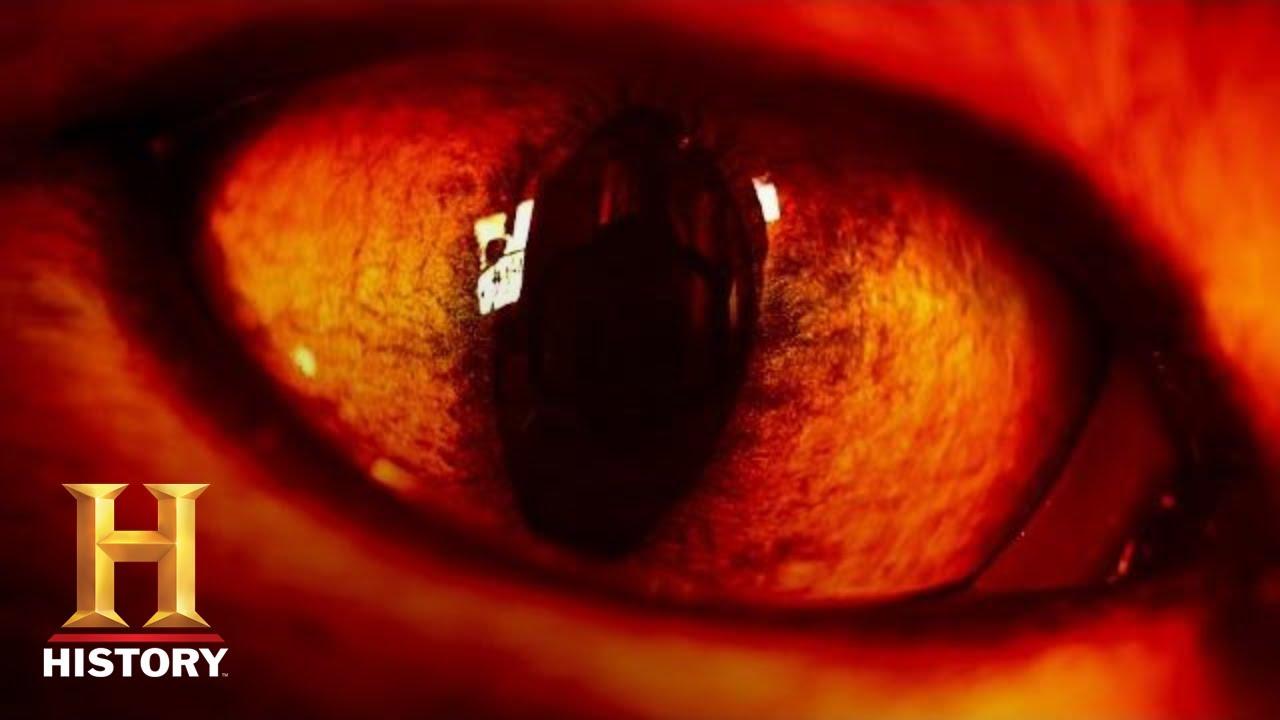 Download Ancient Aliens: ALIEN REPTILES MANIPULATE HUMAN DNA (Season 14) | History