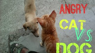 dog's and cat fighting and playing funny video