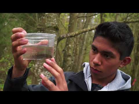 CASEE Sophomores: Hip waders, amphibians and ponds, oh my!