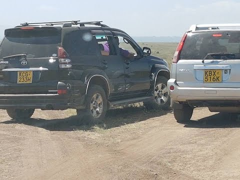 Rogue Nairobi Park Visitors Use Vehicles to Chase After Lions