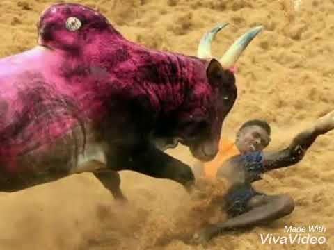 Jallikattu song   New Hit-VeeRa TamilanDA..!!
