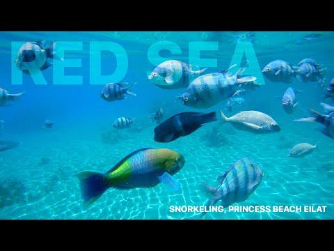 Red Sea Snorkeling, Eilat, Israel (4K)