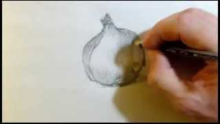 Original Drawing of a Red Onion - How to demo of a Still Life - Pencil - Speed Drawing