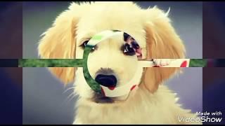 Картинки собак