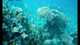 www.divebase.at - Red Sea - Marsa Alam 2008 - 1/2