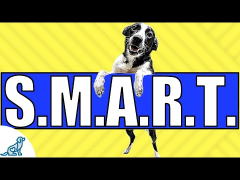 Is Your Dog STILL Not Listening? Time To Train S.M.A.R.T.