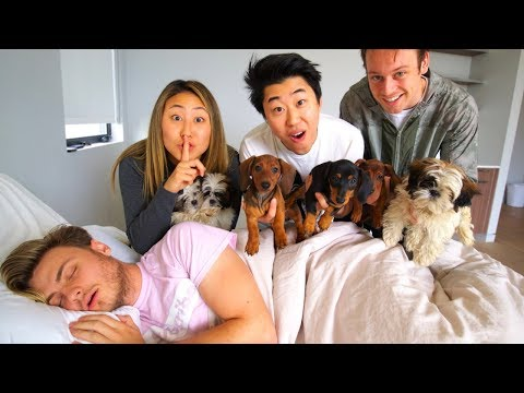 SURPRISING MY BOYFRIEND WITH PUPPIES!!