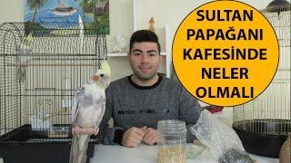 Sultan Papağanı Kafesinde Neler Olmalı | Kafes Düzeni
