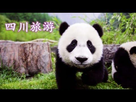 四川旅游 大熊猫 乐山大佛 峨眉山