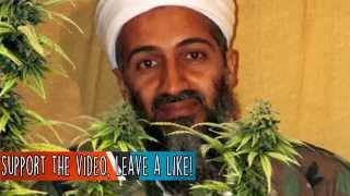 10 Bizarre Things About Osama Bin Laden