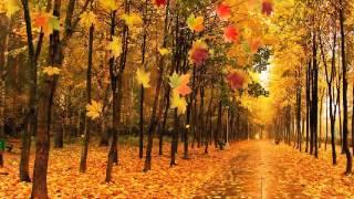 Осень   золотой листопад