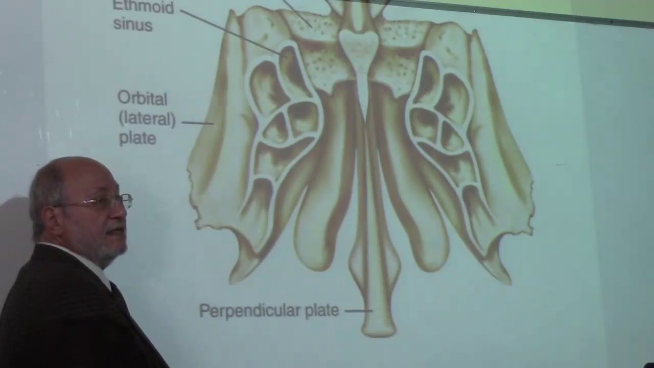anatomy of the nasal cavity by Dr.Wahdan - YouTube